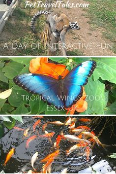 A Day of #Interactive Fun - Tropical Wings #Zoo in #Essex, #UK - #travel #tips…
