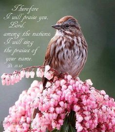 Psalm 18:49