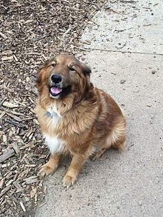 Pictures of Tuddy a 8 yr. old male Golden Retriever/Collie mix for adoption at Forgotten Paws Pet Rescue, Acworth, GA who needs a loving home.