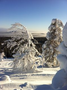 Luosto, Lapland Cozy Christmas, Xmas, Family Tree For Kids, Lapland Finland, Nordic Living, Winter Scenery, Winter Beauty, Beautiful Places In The World, Winter Landscape