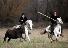 Arles : le rendez-vous des amoureux du cheval de race Camargue