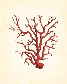 Vintage Red Sea Coral Plate
