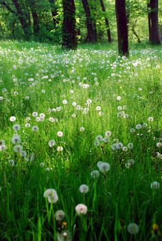 source: lakewentworth ~ beautiful  areyouhappyenough:    a field full of wishes, why am I not here!