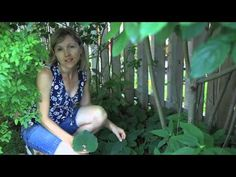 Ontario Invasive Plant Council's Colleen Cirillo introduces us to the native ground cover, wild ginger, and shows us how to identify this plant. Wild Ginger, Invasive Plants, Education, Garden, Garten, Educational Illustrations, Lawn And Garden, Learning, Outdoor