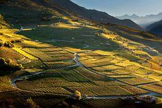 Sierre, Valais, Suisse, vignes en terrasses