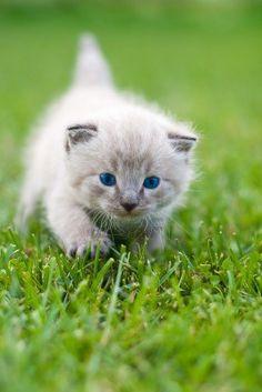 White kitten on the grass