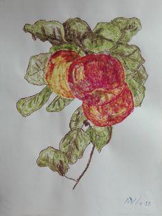 manzanas dibujo realizado con 3 pigmentos clorofila, antocianina, xantofilas