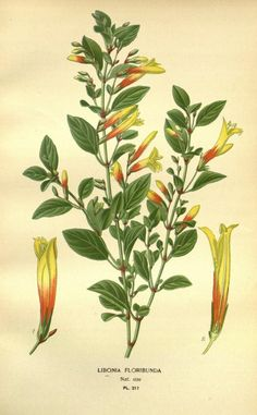 v. 3 - Favourite flowers of garden and greenhouse / - Biodiversity Heritage Library