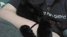 @ Stories @ The Animal Rescue Site - Finding Felix - Abandoned, beaten kitten finds his forever home with good samaritan!
