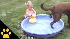 UVIOO.com - Dog Ruins Little Girls Rubber Duck Play Time