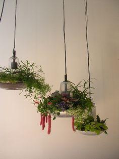 HG plant lights