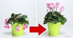 3Ingredientes que resucitarán tus plantas favoritas