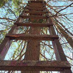 #found someone's #treestand. #hunting #hike #newyork #hudsonvalley #catskills #wilderness #woods #hikehost
