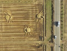 Chinese artists build three giant straw crabs to protest air pollution in Shanghai