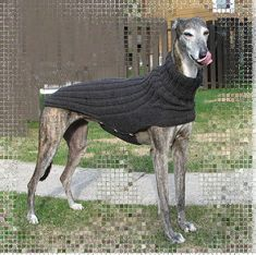 I plan on rescuing greyhounds once I have the time and resources (my family has had 2 so far), and I will make them adorable cozy sweaters just like this!