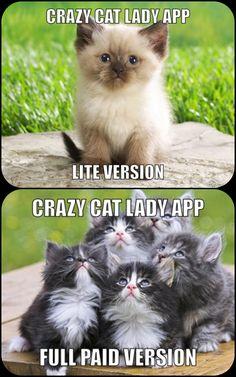 Crazy cat lady apps