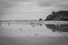 To capture this image I lay on the wet sand so the seagulls wouldn't fly away on my visit to Warrnambool with some friends!  #Warrnambool #victoria #warrnamboolbeach #beach #victoriancoast #blackandwhite #seagulls #reflection #weekendaway #greatoceanroad #waves #cloudyday by susymphotography