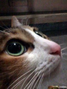 20140118 冬天的凌晨在樓梯口陪了這紅鼻子一些時間 他就一直在腳上發抖 一度以為是被棄養的貓咪 還好只是一時糊涂偷溜出外