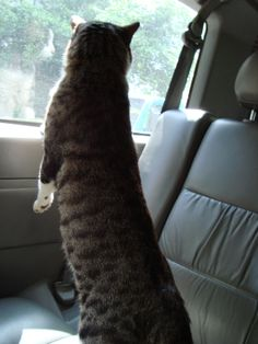 Kittynyong is standing in my car..