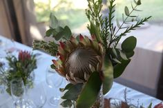 Fynbos wedding in the winelands Weddings, Plants, Wedding, Plant, Marriage, Planets