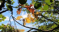 Presentiment of impending autumn in July? Sinikka Kujala