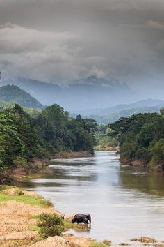 One Week Sri Lanka Itinerary for Couples: Luxury, Wildlife, & Tea