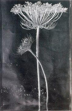 DESTIN à TERRE — iamjapanese: Pilar Pequeño(Spanish, b.1944) via