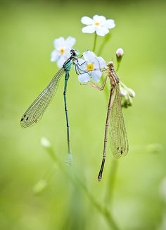 Tender_Nature_Photography_by_Sasha_Ch_6 - Dragonflies