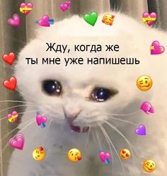 Stupid Pictures, Cute Memes, Forever Love, My Crush, I Love You, Cats, Animals, Instagram, Board