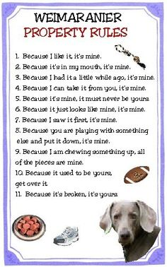 Weim property rules, this could not be any more true. Our Weimar is alway doing this to our rotary.
