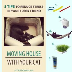 5 TIPS for making moving house easier on your cat - When we moved to a new appartment, we tried to find a way to make the experience as stress-free as possible for our cat Ananas. These are the 5 things we did to make him feel right at home in our new abode!
