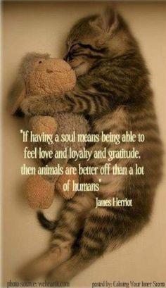 Petit Cabinet de Curiosites - (via Animals & Friends / . Cute Funny Animals, Cute Baby Animals, Animals And Pets, Cute Cats, Funny Cats, Cat Quotes, Animal Quotes, Crazy Cat Lady, Crazy Cats