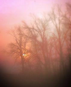 Foggy sunrise in Arkansas