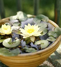 DIY- Mini Lily Water Garden. See this project and more tabletop water garden ideas: http://www.midwestliving.com/garden/container/easy-tabletop-water-gardens/