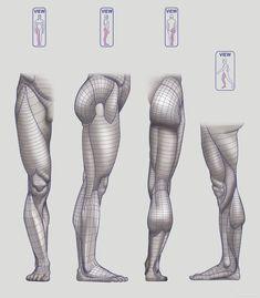 Anatomy Next - Anatomy of Lower limb: Block-outs Human Muscle Anatomy, Human Anatomy Drawing, Human Figure Drawing, 3d Anatomy Model, Human Anatomy For Artists, Body Reference Drawing, Anatomy Reference, Art Reference Poses, Leg Anatomy