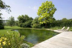 zwemvijver in tuin, losse vorm ‹ De Mooiste Zwembaden