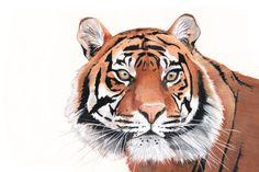 Tiger Watercolor Painting animal art print of от LouiseDeMasi