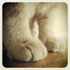 #Puppy paws #madison #losangeles #instagram