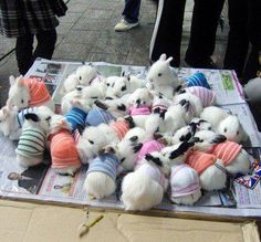 Bunnies! bunnies in sweaters!