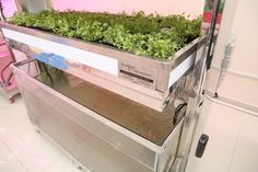 We provide complete #commercialhydroponicsfarming solutions worldwide - offering food-grad commercial hydroponics systems, #hydroponicnutrients, and #supplies. We are dedicated to providing the best solutions for our clients.  http://www.studpac-as.com/hydroponics/