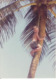 Palm Tree Hugger