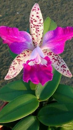 Beautiful Flowers, Beautiful Orchids, Plants, Planting Flowers, Flowers, House Plants, Trees To Plant, Rare Flowers, Blossom Garden