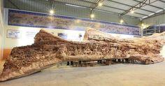 ZhengChunchuiest l'artiste qui est à l'œuvrede ce magnifique travail qui lui a demandé un temps fou.Il a travaillé 4 années pour se tailler sa place dans le livre des records mondial.Il voulait réaliserla gravure sur bois la plus longue au monde et il a réussi.Cet art magnifique contenu dans un tronc d'arbre qui a pour longueur 12 mètres vient de le mettre en tête de liste.Voici une vidéo, qui vous montre le travail impressionnant qui a été opéré sur ce tronc.