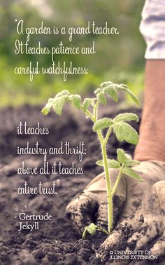 """""""A garden is a grand teacher. It teaches patience and careful watchfulness; it teaches industry and thrift; above all it teaches entire trust."""" - Gertrude Jekyll #quote #inspiration"""