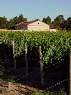 Argentine winery