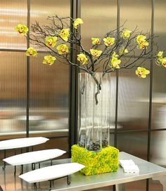 cushion base for cylinder orchid manzanita | Branching Out Events