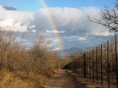 Rainbow over Daktari, South Africa