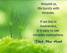 Image result for thich knat han quotes