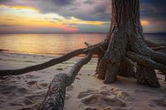 Roaring Point Roots