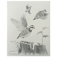 """Bob-White Quail print signed by artist Gene Gray, numbered 536/1000. 14""""h x 11""""w."""
